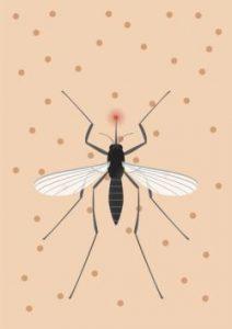 fliegengitter-mosquito